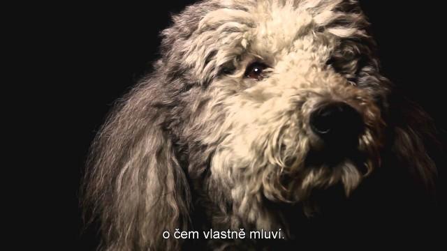 Psie srdce