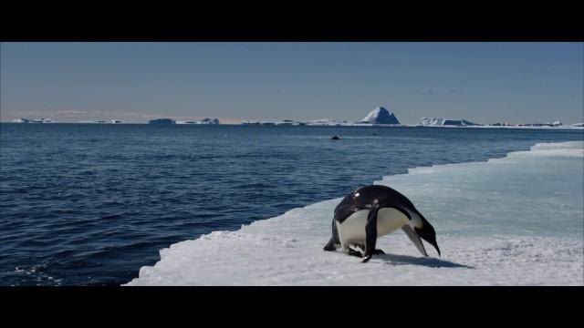 Putovanie tučniakov: Volanie oceánu online film